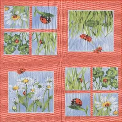 Ladybird - red