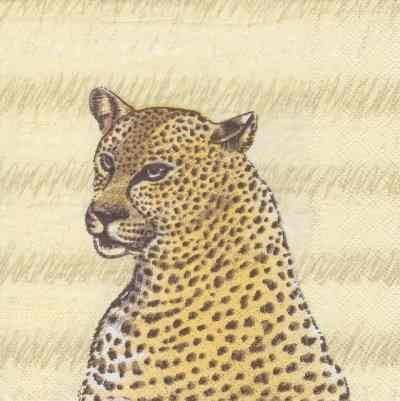 Safari Leopard