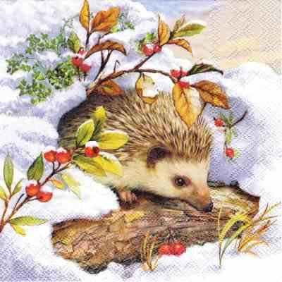 Hedgehog in Snow