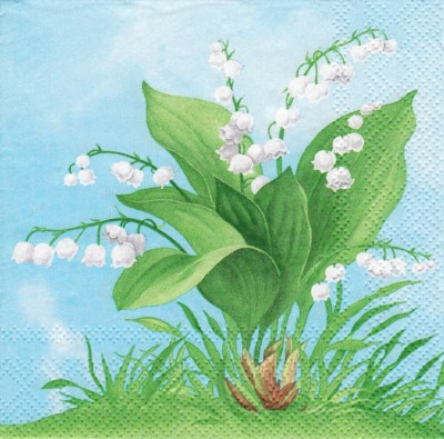 Lily of the Valley (25) (E)
