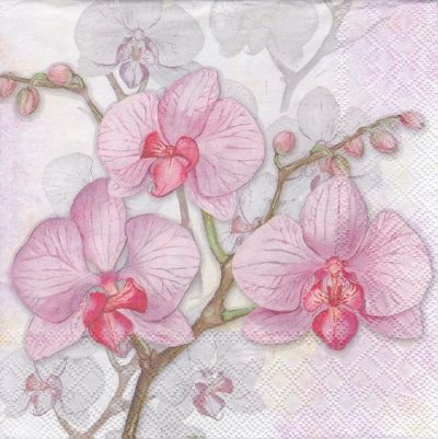 Orchids - lilac