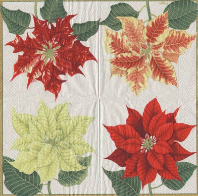 Poinsettias - ivery (E-2)