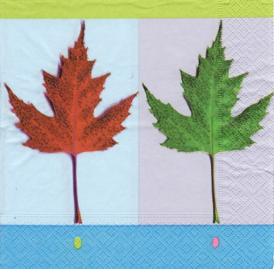 Red & green maple leaves