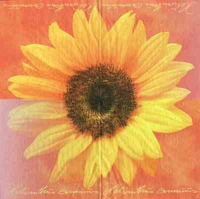 Helianthus annuus - orange (E-3)